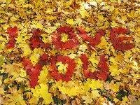 escribir te quiero en hojas de otoño