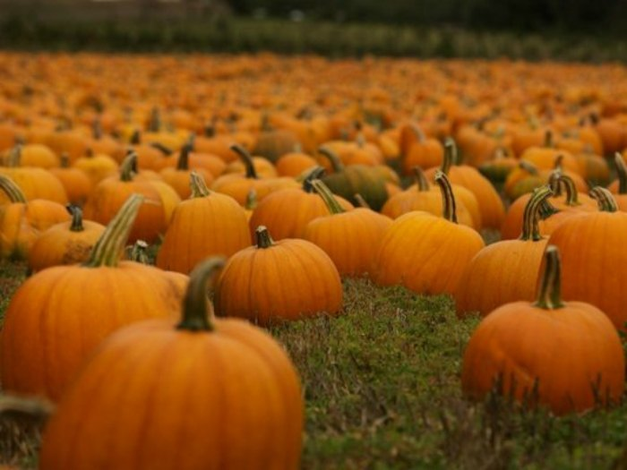 Fotos de calabazas Halloween