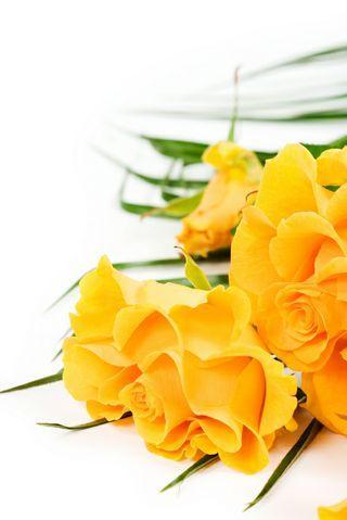 flore amarillas