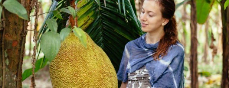 Curiosidades y recetas con Jackfruit o Fruta del Pan (Aptas para veganos)