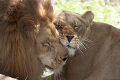 leon y leona