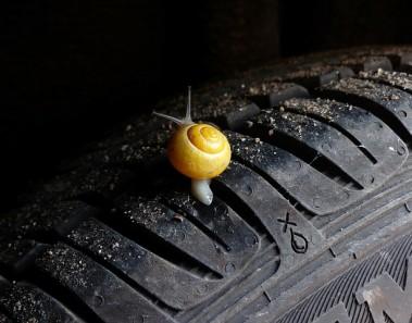 snail-505511_640