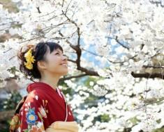 japonesa-yakura-flores-cerezos