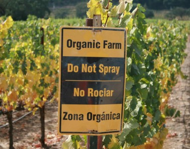 Impulso normativo a la alimentación y agricultura ecológica