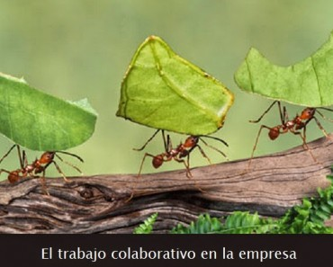 El trabajo colaborativo en la empresa