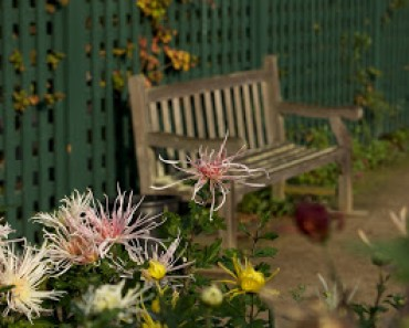 Ecología Urbana: Palo Alto Lifestyle