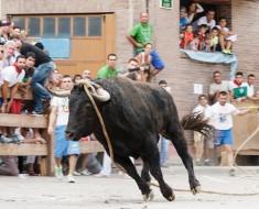 fiesta polémicas en España con animales