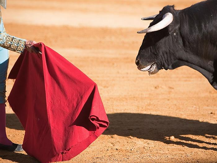 fiestas polémicas en España: Los Toros