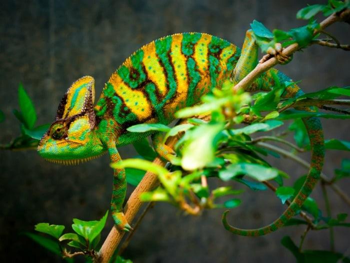 camaleon-color-mentiras-euroresidentes