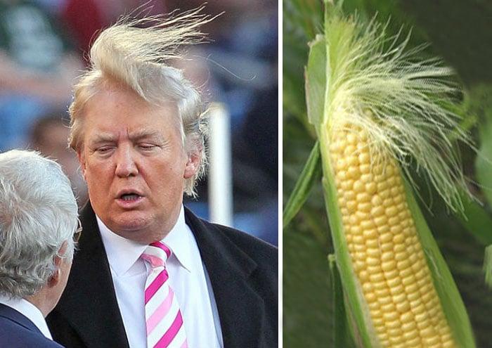 Meme Trump Choclo