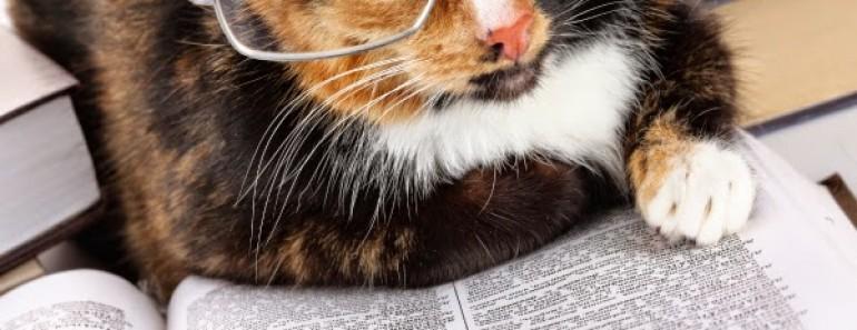gato-libro
