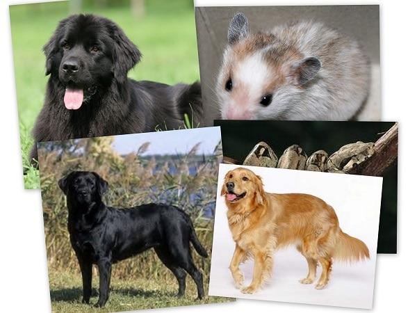 mascotas Acuario