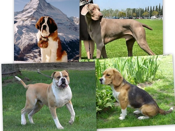 mascotas Géminis