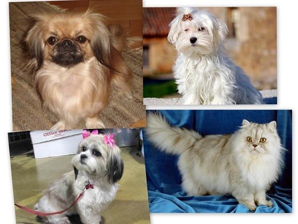 mascotas de Capricornio