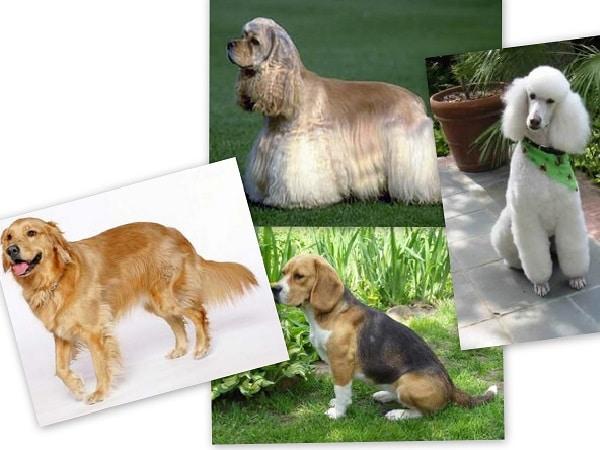 mascotas Libra