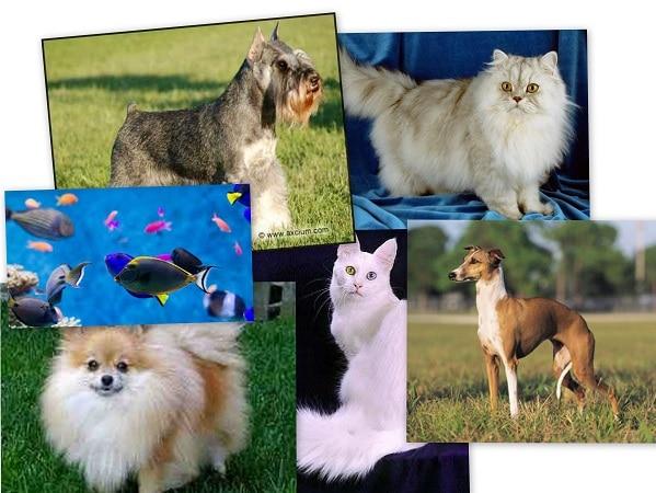 mascotas Piscis