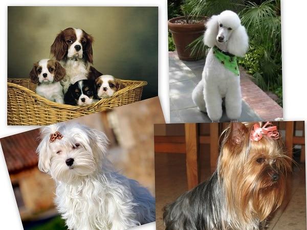 mascotas Virgo
