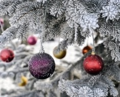 Christmas baubles hanging on an icy fir