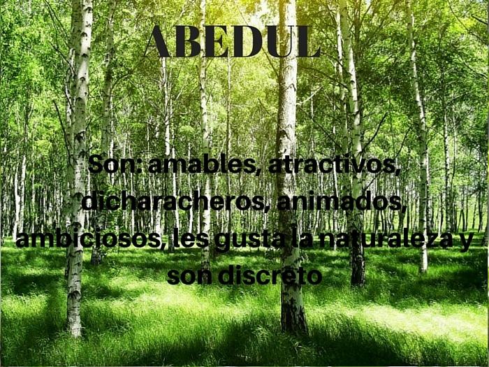 El Abedul y el Zodiaco