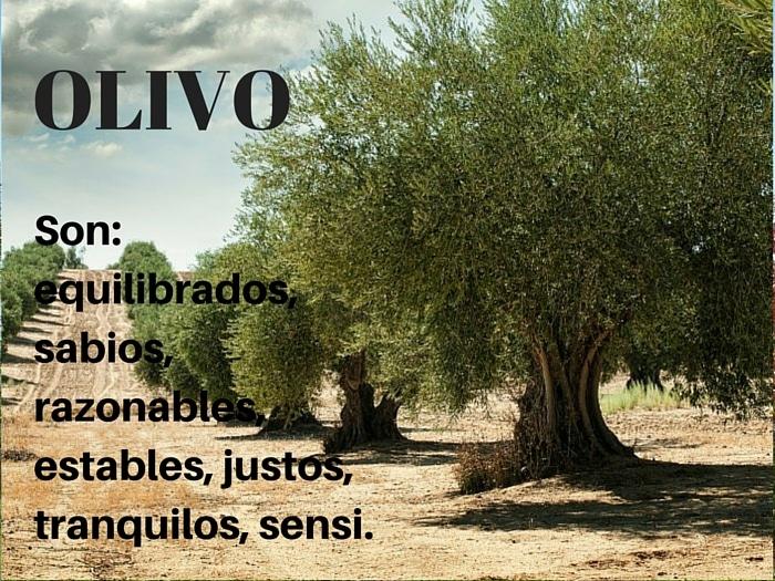 El Olivo y el Zodiaco
