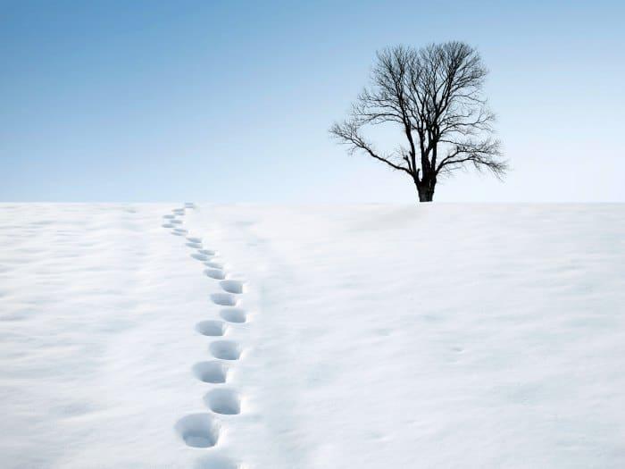 Huellas de pisadas en la nieve, frío