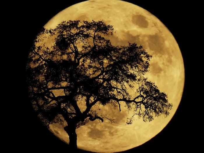 Superluna del 14 Noviembre ayuda a los Horóscopos