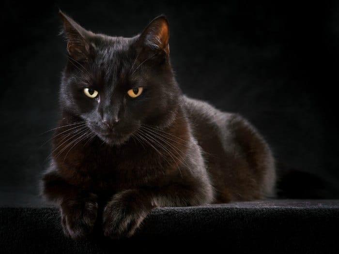 Supersticiones: ¿Hay razones para creer en ellas?