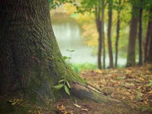 Qué árbol eres según tu cumpleaños