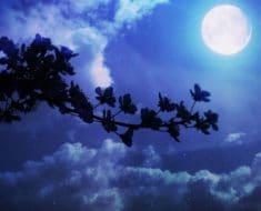 Influencia de la Luna llena del 17 de Junio 2019
