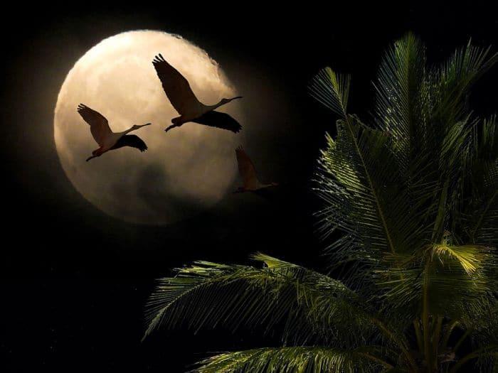 Luna Nueva del 30 de Agosto 2019