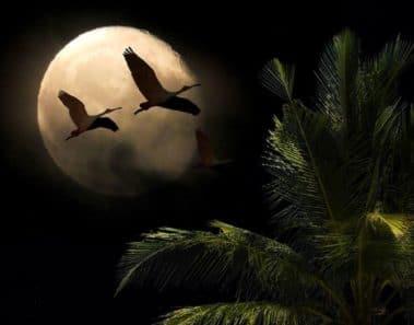 La Luna Nueva del 30 de Agosto nos aporta realidad