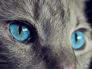 Los Gatos y su relación con el Esoterismo