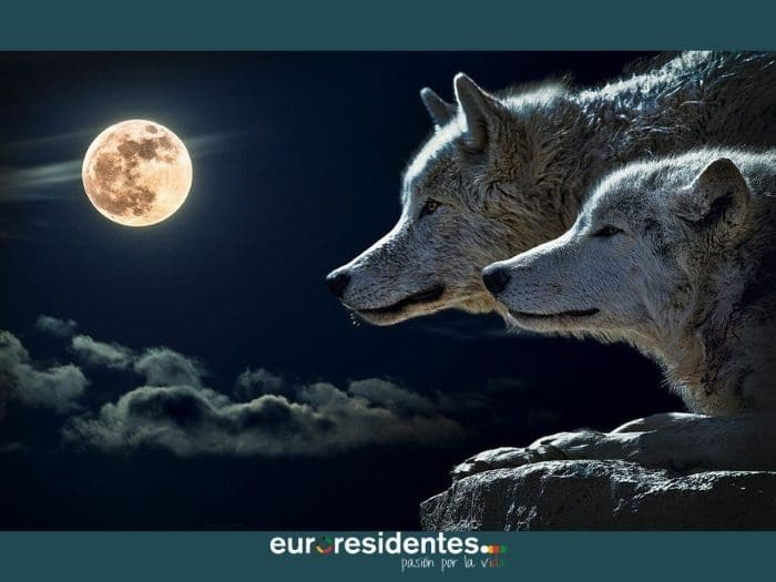Luna Llena del 28 de Enero 2021