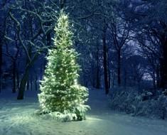 Pensamientos Navidad