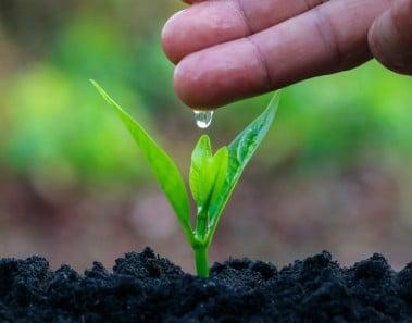 Frases cuidar medio ambiente