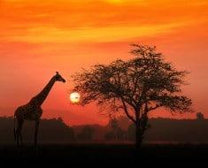 Frases África