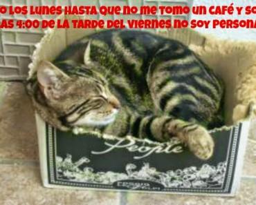 gato-durmiendo1