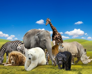 Refranes Animales