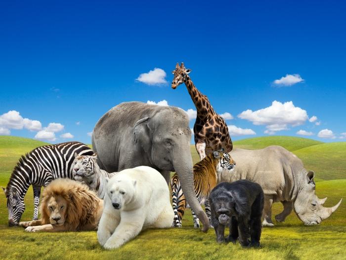 Refranes Sobre Animales Frases Y Citas Célebres