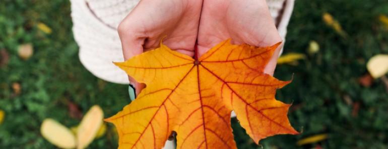 Refranes de otoño
