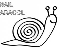 caracol_colorear