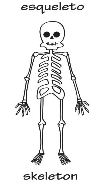 dibujo de esqueleto