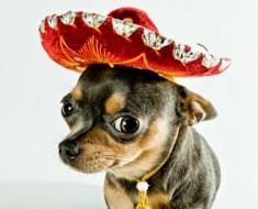 chistes-cortos-mexicanos