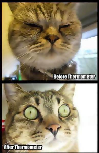 imágenes graciosas del antes y el después gatito
