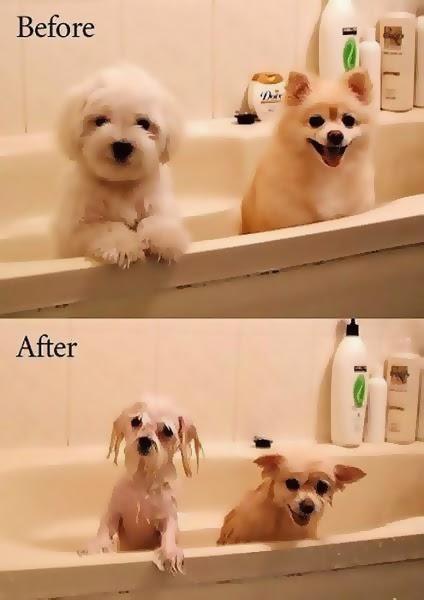 imágenes graciosas del antes y el después perritos