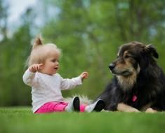 perro-nino-1