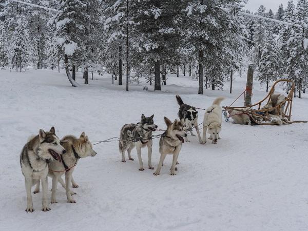 Acabar el año en en el Polo Norte
