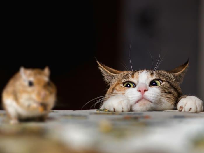 curiosidades zurdos, gatos y ratones