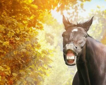 8 chistes de se abre el telón
