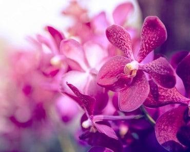 ¿Cuáles son mis flores según mi horóscopo?